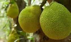 Saint Martin - Sint Maarten - Gastronomie